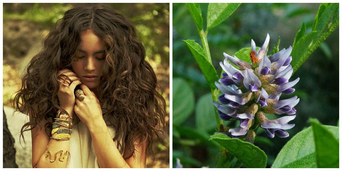 tratamento de cabelo em casa, raizes de flor