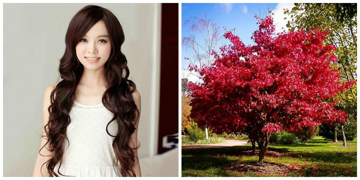 tratamento de cabelo em casa, tratamento de cabelo japones
